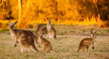 21 grunde til (endelig) at besøge Australien!