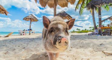 6 strande med utrolige dyr