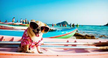 Checkliste for dig og hunden til ferien