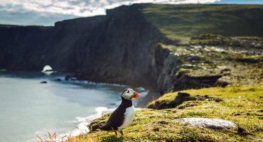 En lokalguide til Island: 5 steder, du ikke må gå glip af.